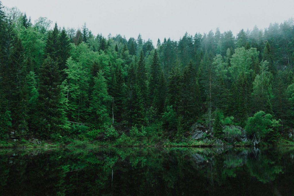 MPS Monitor und PrintReleaf: eine Partnerschaft für 31.880 Bäume