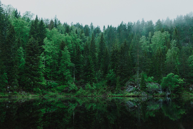 MPS Monitor e PrintReleaf: una partnership che vale 31.880 alberi